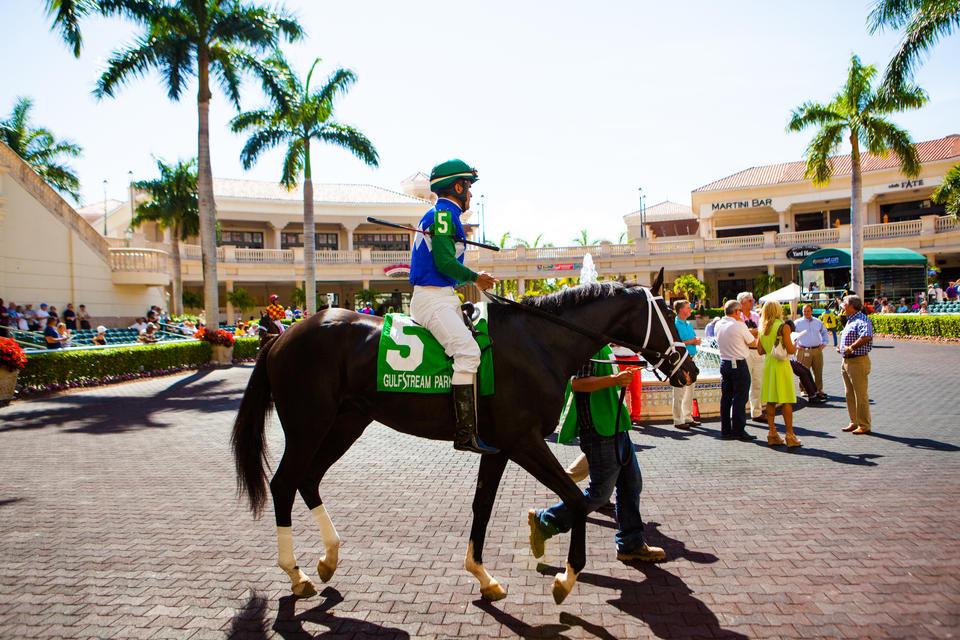 Horse At Gulfstream Park