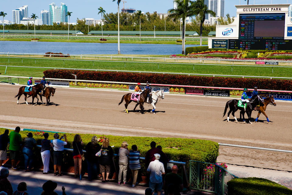 Horse Parade At Gulfstream Park