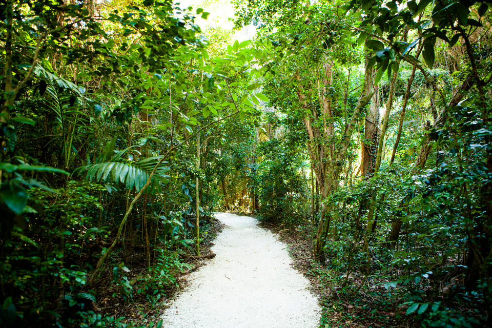 Brickell Forest