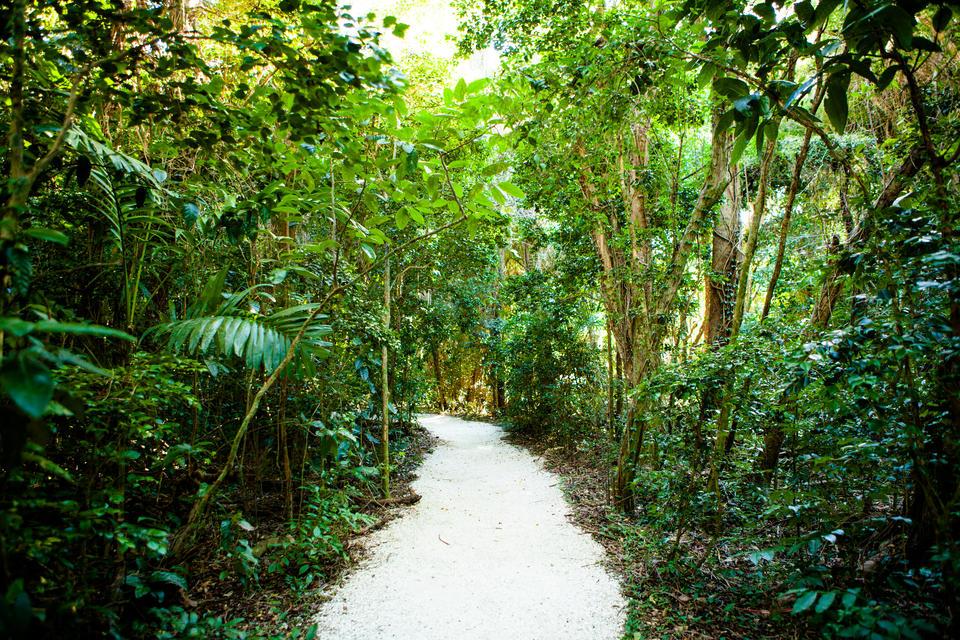 Brickell Forest