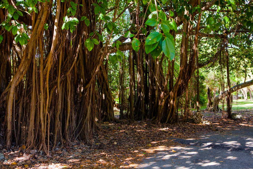 Fairchild Garden Path