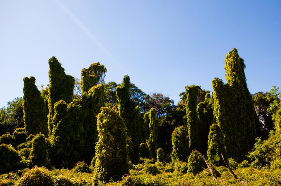 Fairchild Garden Trees
